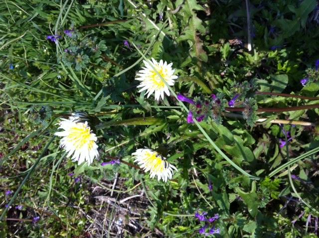 smallflower-1.JPG