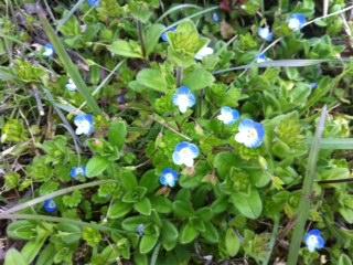 smallflower-4.JPG